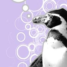 Algoritmi di Google, effetti e bersagli del nuovissimo Penguin